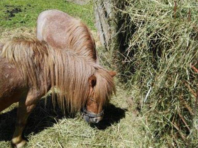 Ponys_Möhrchen_und_Öhrchen.jpg