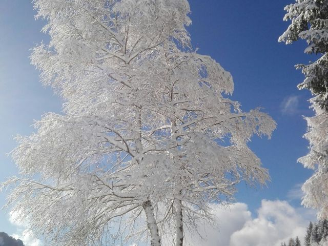 ferienhaus-holzenhof-winter-umgebung
