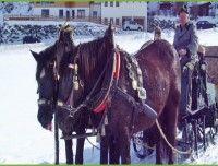 pferdeschlittenfahrt-unken.jpg